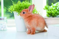 ウサギの飼い方・健康管理の紹介