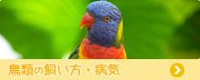 鳥類の飼い方・病気