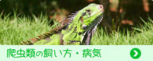 爬虫類の飼い方・病気